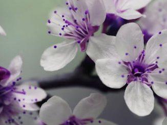 Floreros con calabazas y otras cosas