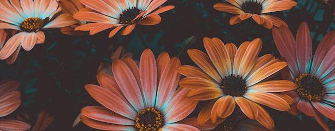 Crear floreros con sorbetes